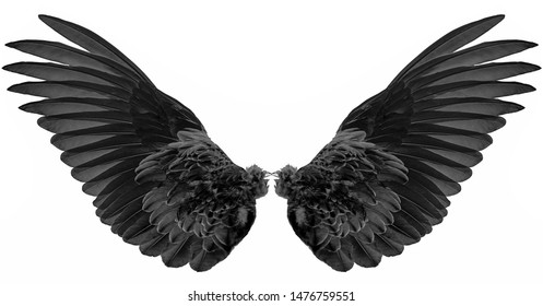black wings isolated on a white