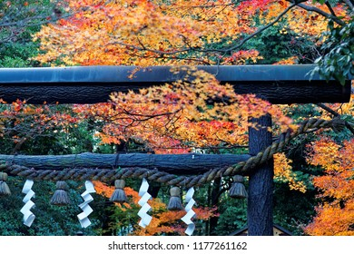 A black wood Torii Gate surrounded by fiery maple foliage in autumn and a Shimenawa straw rope festooned with white Shide paper at the entrance to Nonomiya Jinja Shrine in Arashiyama, Kyoto, Japan