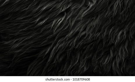 Black wool texture background, dark natural sheep wool, black seamless cotton, texture of gray fluffy fur, close-up fragment of black wool carpet