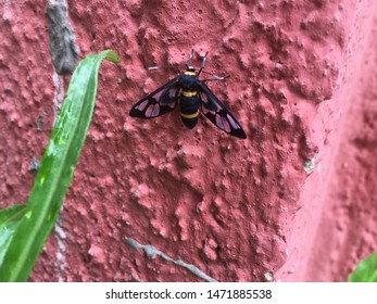 Black and Yellow Bug Images, Stock Photos & Vectors