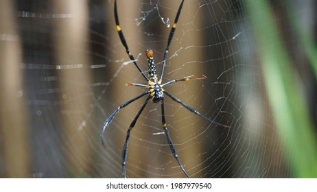 Black and Yellow Spider on the Web - Shutterstock ID 1987979540