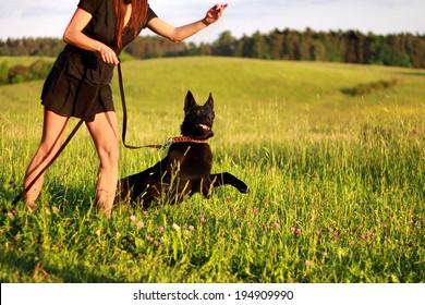 Black young german shepherd - obedience training