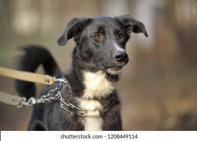 Black-and-white dog. Not purebred dog. Doggie on walk. The not purebred mongrel.