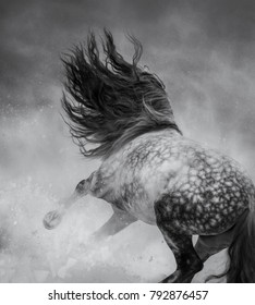 Black-and-white photo. Back view. Wild long-maned horse galloping during snowstorm.
