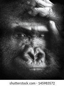 A black-and-white portrait of a gorilla in a zoo.