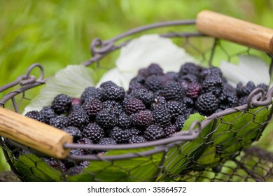 blackberries in basket