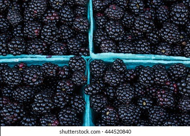 Blackberries in baskets for sale at the farmers market in Asheville North Carolina