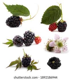 Blackberries, flowers and leaves set
