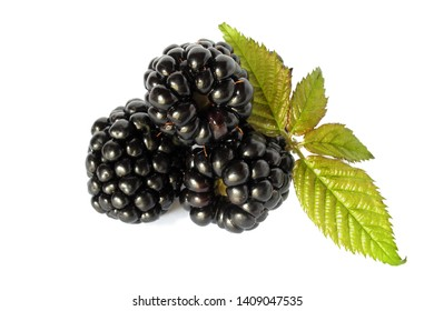 Blackberries isolated on white background