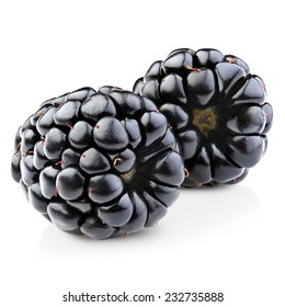 Blackberries isolated on white background. Clipping Path