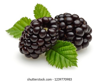 Blackberries with leaves isolated on white background. Macro, studio shot