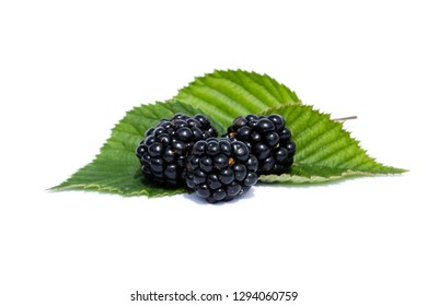Blackberries with leaves isolated on white background