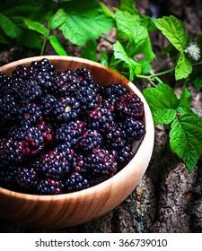 Blackberries  in  wooden bowl.  Selective focus, toned