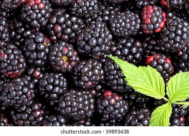 Blackberry background with green leaves
