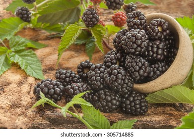 Blackberry in the bowl on a wooden background. Selective focus