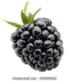 blackberry isolated on white background, clipping path, full depth of field - Shutterstock ID 1505050502