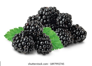blackberry isolated on a white background closeup. Clipping path and full depth of field