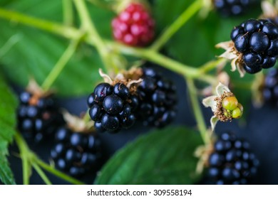 Blackberry with leaves on table, studio shot