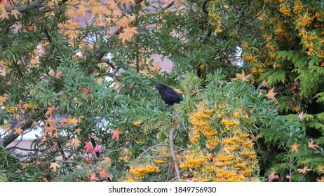 A blackbird on a tree