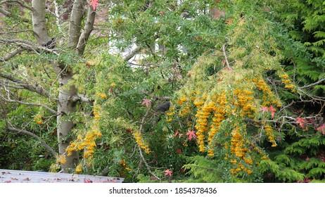 Blackbird sitting on a tree