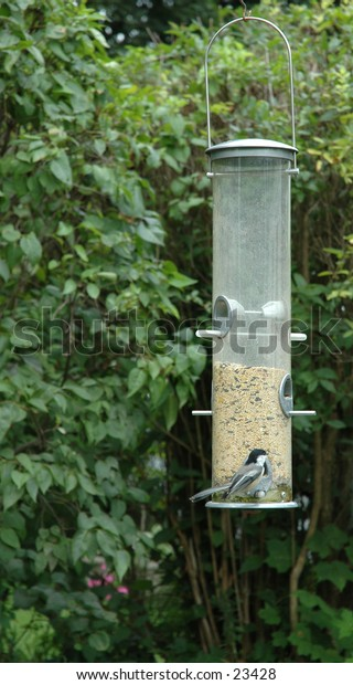 Black-capped chickadee at the bird feeder.