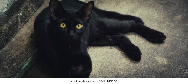 Blackcat is staring on you