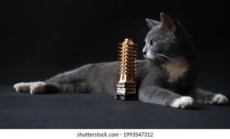 Blackcat starring to the mini pagodas
