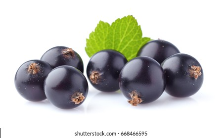 Blackcurrant in closeup