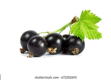 Blackcurrant on white background