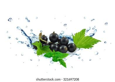 blackcurrant splash isolated on white background