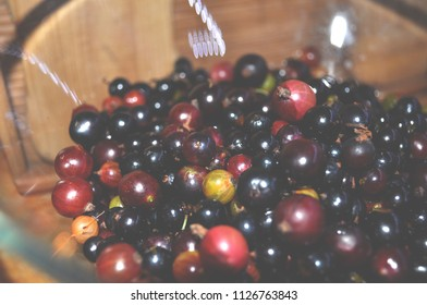blackcurrant in a transparent plate