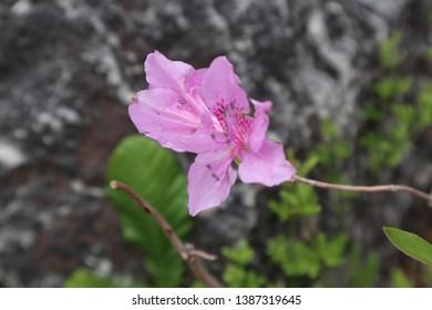 A blackground of flower. Nature blackground