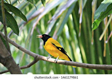 Birds Names Images, Stock Photos & Vectors | Shutterstock