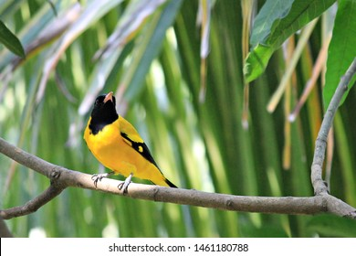 Bird Name Images, Stock Photos & Vectors | Shutterstock