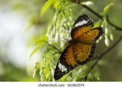 Black-Orange Butterfly in Nature