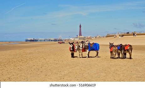 Blackpool beach with donkeys