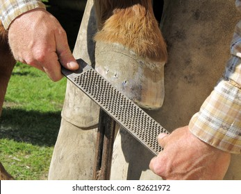 Blacksmith, or equine farrier, fits a horse shoe to a horse's hoof with a rasp.
