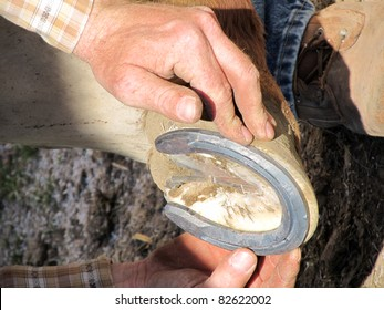 Blacksmith, or horse farrier, fits a horse shoe to a horse's hoof.