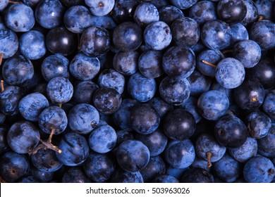 Blackthorn berries full screen