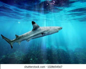 Blacktip reef shark swimming in blue sea with light rays underwater