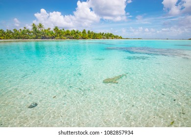 Blacktip reef shark swims in shallow tropical waters of Fakarava, French Polynesia