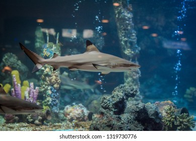 Blacktip shark in glass box at marine aquarium