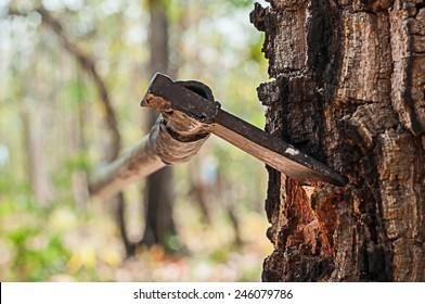 Blade axe down a tree