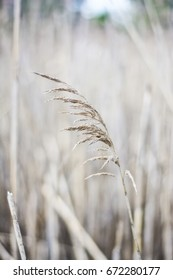 A blade of beach grass in front of a field.