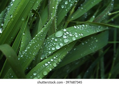 blade of grass covered with drops of rain