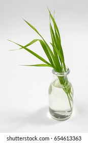 blade of grass in glass vase on white background