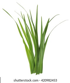 Blade of grass isolated on white background. Clipping Path included for your design.