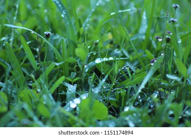 Blades of Grass After the Rain