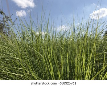 Blades of Grass with Blue Sky