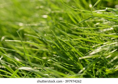 Blades of grass in natural light